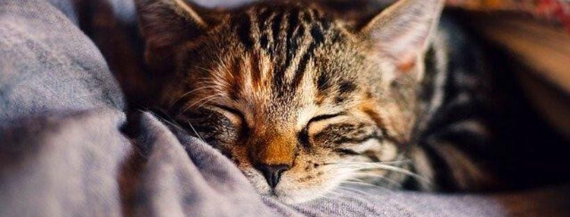 Erholsamer Schlaf: So findest du deinen Schlafrhythmus für mehr innere Ausgeglichenheit