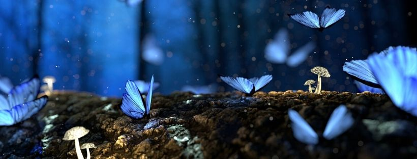 Metamorphose des Ichs: Vom verblüffenden Prozess, deinen Träumen Flügel zu verleihen