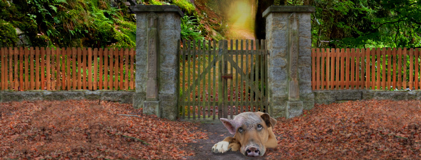 Wo kein Wille ist, ist auch kein Weg – So sperrst du deinen inneren Schweinehund vor die Tür